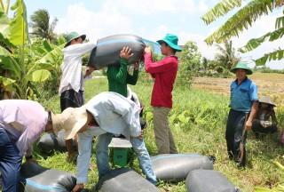Sản xuất lúa trong tình hình biến đổi khí hậu