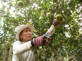 Bình Hòa tập trung phát triển kinh tế nông nghiệp