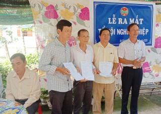 An Khánh ra mắt tổ hội nghề nghiệp trồng bưởi da xanh