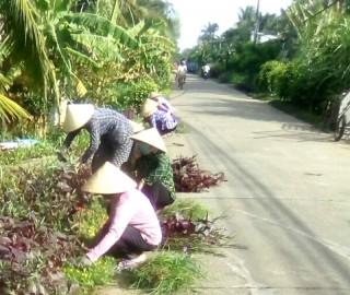 Thạnh Phú Đông hoàn thành nhiều tuyến đường giao thông nông thôn