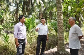 Châu Bình khôi phục vườn dừa sau hạn mặn