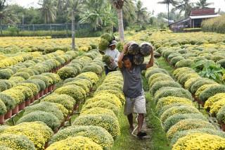 Phát triển hiệu quả nghề làm cây giống