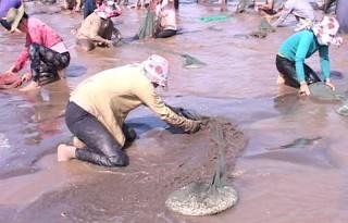 Hợp tác xã thủy sản Rạng Đông khai thác 342 tấn nghêu