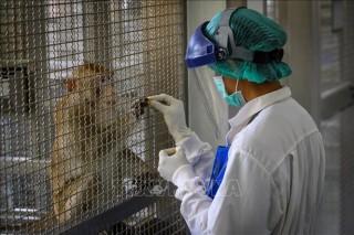 Thái Lan thử nghiệm thành công vaccine ngừa COVID-19 trên khỉ và chuột