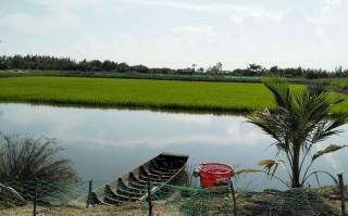 Nuôi tôm càng xanh toàn đực xen lúa và luân canh tôm sú sinh thái hiệu quả cao