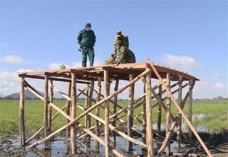 Việt Nam không có ca mắc COVID-19 mới, 805 ca đã được điều trị khỏi