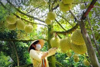Tái cơ cấu sản xuất nông nghiệp giai đoạn 2021 - 2025