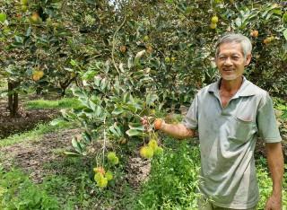 Vườn cây trái Tân Phú đón khách du lịch