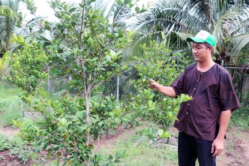 Trồng nhiều giống cây mới lạ để thu hút du khách