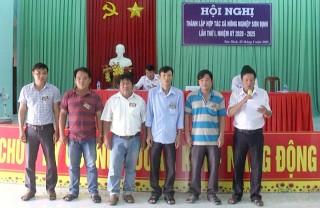 Sơn Định thành lập hợp tác xã nông nghiệp