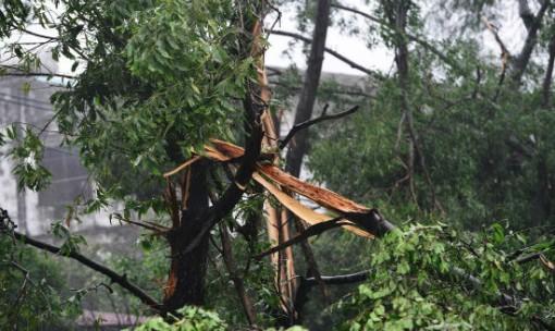 Bồi thường thiệt hại do cây cối gây ra