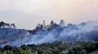 Cháy rừng tại Syria và Liban đã được kiểm soát