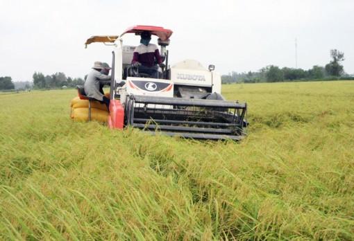 Ba Tri đẩy mạnh phát triển nông nghiệp toàn diện