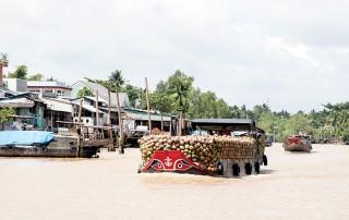 Mỏ Cày Nam phát triển vùng nguyên liệu nông sản tập trung