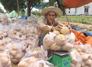 Nông dân Thừa Đức được mùa củ sắn