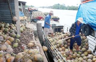 Quy hoạch phát triển làng nghề dừa sông Thom