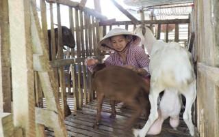 Đa dạng sinh kế, góp phần nâng chất tiêu chí xã nông thôn mới