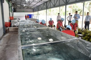 Phát triển công nghệ chế biến ngành dừa