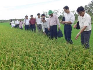 Phát động phong trào thi đua sản xuất, kinh doanh giỏi trong nông dân