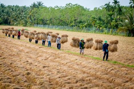 """Phát triển nông nghiệp """"sạch, an toàn, hiệu quả"""""""