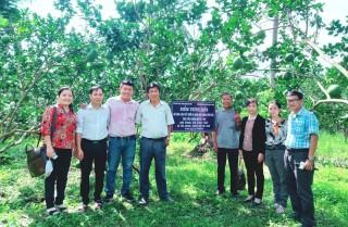 Tân Trung trồng bưởi da xanh theo tiêu chuẩn hữu cơ