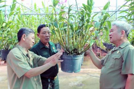 Cựu binh phường Phú Khương điển hình trong xây dựng quê hương
