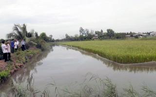 Hội thảo đánh giá mô hình sản xuất thử nghiệm giống lúa lai Thơm 6