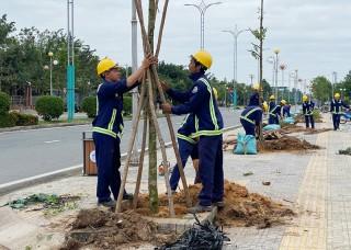"""""""Tết trồng cây"""" ở quê Dừa"""