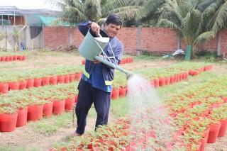 Mỏ Cày Bắc: Chủ động nguồn nước bảo vệ vụ hoa kiểng Tết