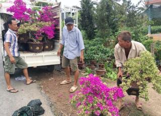Làng hoa, cây kiểng phập phồng lo thị trường Tết