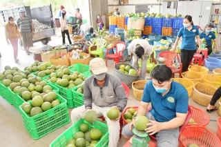 Xây dựng vùng sản xuất tập trung, gắn phát triển chuỗi giá trị nhóm sản phẩm nông nghiệp chủ lực tỉnh