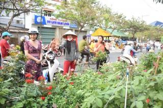 Chợ Lách đẩy mạnh xúc tiến tiêu thụ hoa kiểng Tết Nguyên đán
