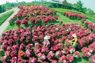 Hướng tới Trung tâm giống cây trồng, hoa kiểng quy mô quốc gia