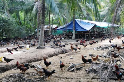 Quy định khu vực không được phép chăn nuôi