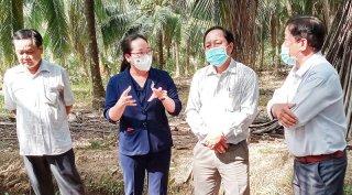 Khảo sát tình hình sâu đầu đen hại dừa ở Mỏ Cày Nam và TP. Bến Tre
