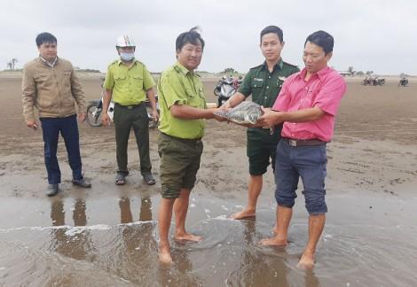 Thạnh Phú thả con vích hơn 6kg về biển