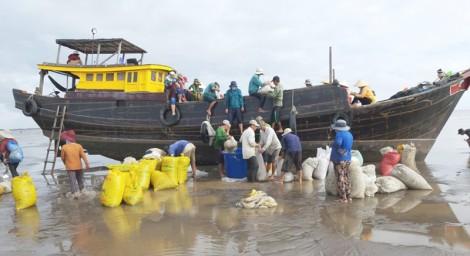 Hợp tác xã thủy sản Đồng Tâm thu hoạch hơn 378 tấn nghêu các loại