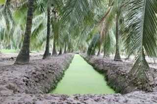 Đẩy mạnh cho vay sản xuất nông nghiệp qua tổ vay vốn