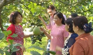 Hỗ trợ phát triển hợp tác xã nông nghiệp kiểu mẫu