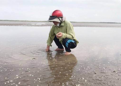 Nghêu chết trên diện rộng tại Hợp tác xã thủy sản Rạng Đông