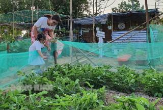 Mô hình vườn thực nghiệm nông nghiệp của thanh niên
