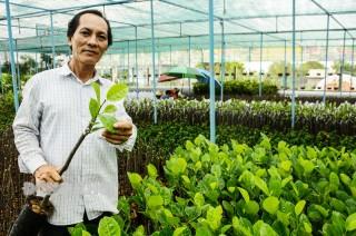 Chợ Lách vào mùa sản xuất cây giống