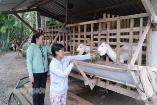 Mô hình nuôi dê giúp nhiều hội viên phụ nữ thoát nghèo