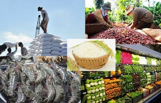 Tháo gỡ khó khăn, thúc đẩy tiêu thụ, vận chuyển nông sản trong điều kiện Covid-19