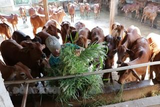 Xây dựng mô hình chăn nuôi thích ứng với biến đổi khí hậu
