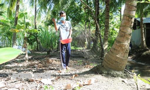 Chăm sóc cây dừa sau hạn mặn