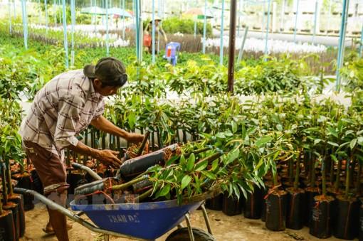 Chợ Lách: Sản lượng trái cây ước đạt 35 ngàn tấn