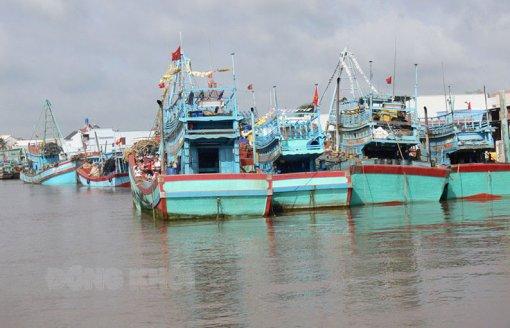 Bắt buộc đưa vào bờ đối với tàu cá mất tín hiệu trên 10 ngày