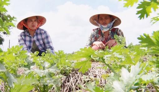 Sản xuất nông nghiệp hữu cơ thích ứng biến đổi khí hậu