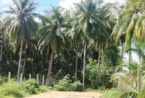 Phú An Hòa nỗ lực xây dựng xã nông thôn mới